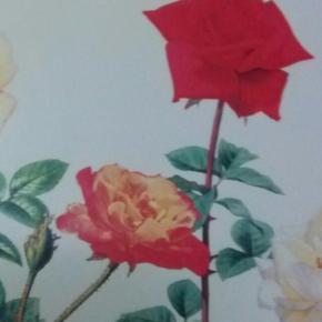 【玫瑰花-浪漫爱情的象征】在线收听_专辑mp3下载