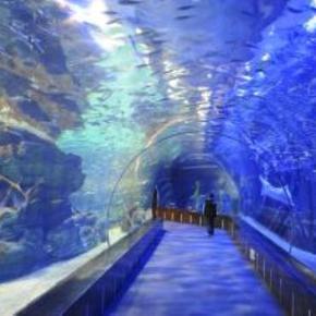壁纸 海底 海底世界 海洋馆 水族馆 290_290