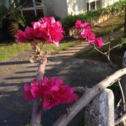 拒绝分裂:生活本来就是鲜花和荆棘并存(毕淑敏)-喜马拉雅fm
