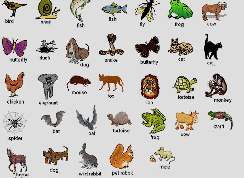 沪江词库精选奥塞氏动物英文怎么写,英语单词怎么写,例句等信息图片