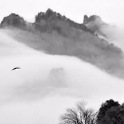 石壕吏【杜甫】-喜马拉雅fm