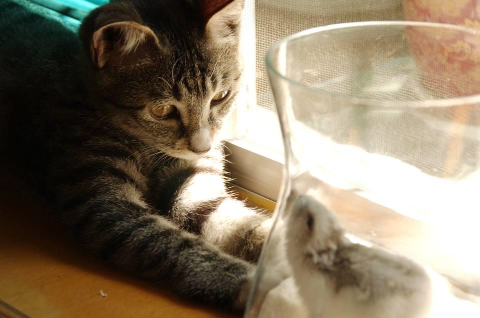 作为全体动物的公敌,老鼠还能生生不息,不可不说是大自然的奇迹了!