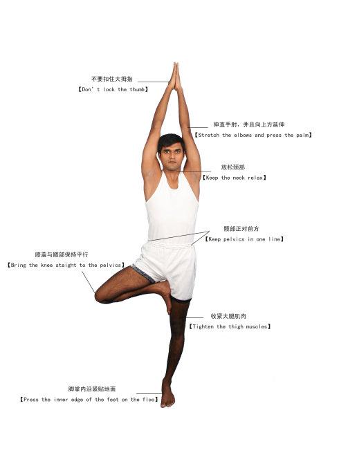 6瑜伽体式-树式图片