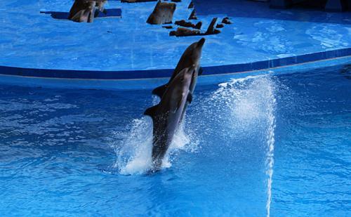 """让孩子们尽情玩耍;海洋馆,海豚表演与百鸟相辉映,打造""""海陆空""""动物"""