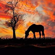 我可以做 一片树叶,长在你每日黄昏散步的树林里,因为在图片