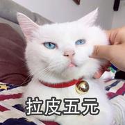 【情景段子】猫奴必听!如果古诗词都变成猫-喜马拉雅fm