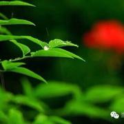 小雪 陈金茂-喜马拉雅fm