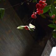 林清玄 | 黑钻石与红珍珠-喜马拉雅fm