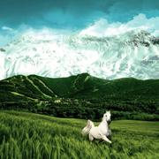 分析师黄林:业绩为王白马股跌之后继续低吸。-喜马拉雅fm