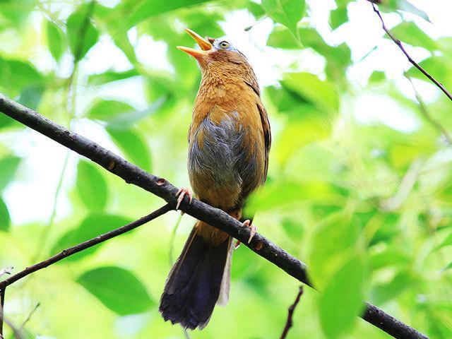 【高清版】群鸟鸣叫系列二_实录大自然的声音_健康