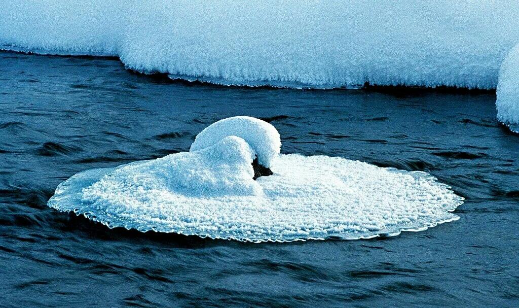 壁纸 动物 海洋动物 鲸鱼 桌面 750_444