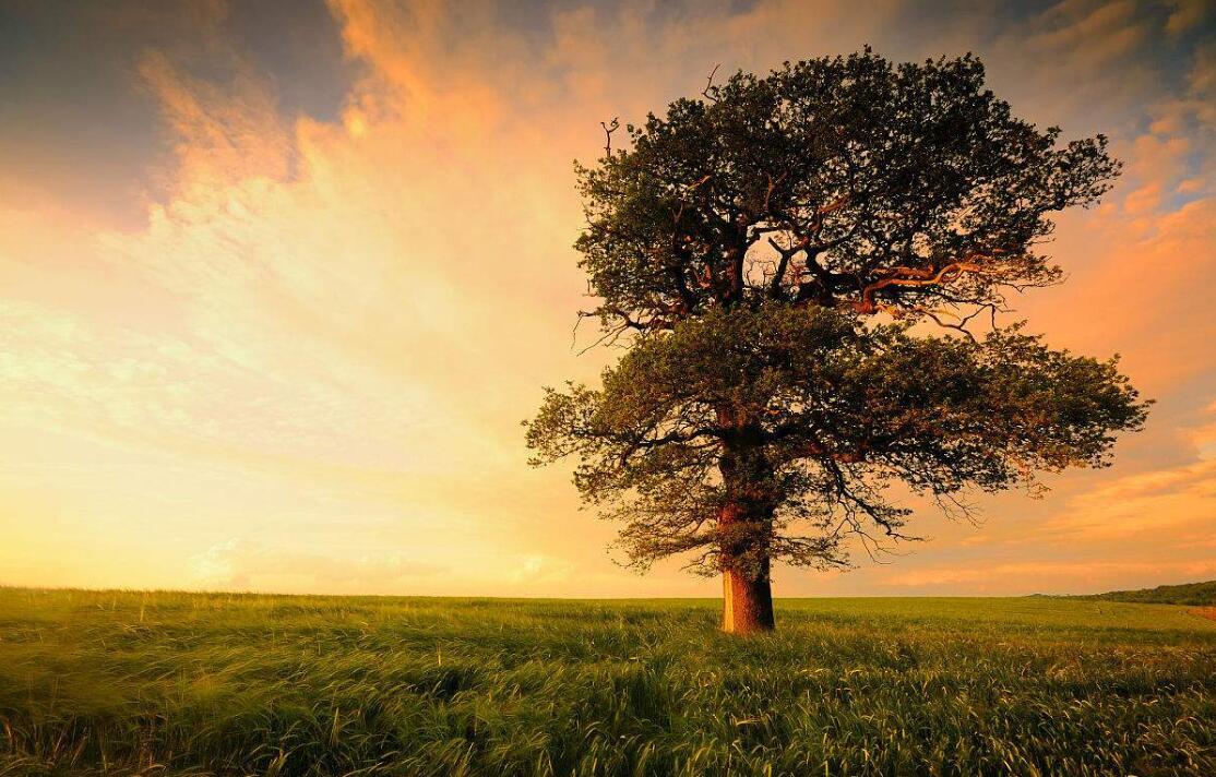 舒婷的攺#hy�'��._【夜的诗】 《致橡树》舒婷—爱你伟岸的身躯,也爱你足下的土地